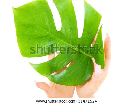 picture of female hands with green leaf over white - stock photo