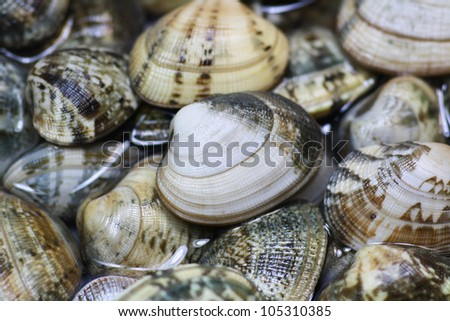 Picture of Fresh Italian Clams