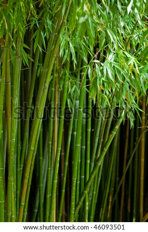 Picture of green bamboo forest with shallow DOF - stock photo