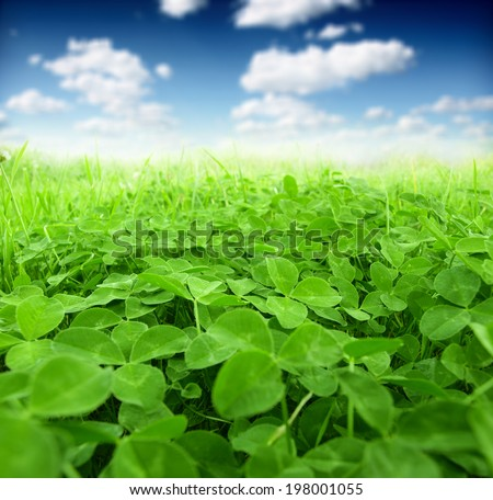 Picture of green clover field - stock photo