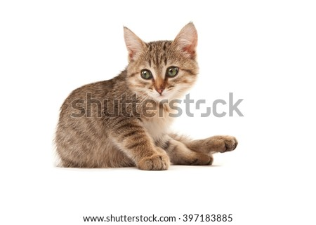 Picture of green eyes kitten isolated on white - stock photo