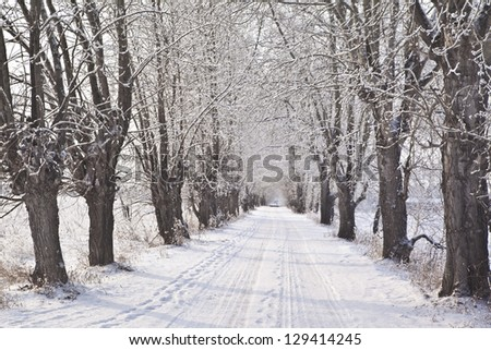 Picture of grey frozen trees and winter rural road - stock photo