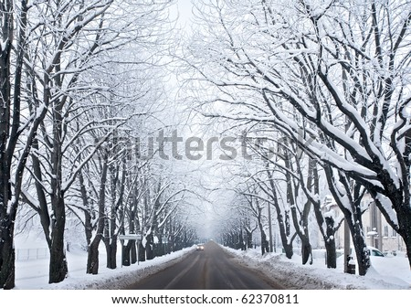 Picture of grey frozen trees and winter urban road - stock photo