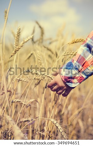 Picture of little boy in golden wheat field. Closeup of child hand holding golden wheat spike on summer countryside agricuture background.