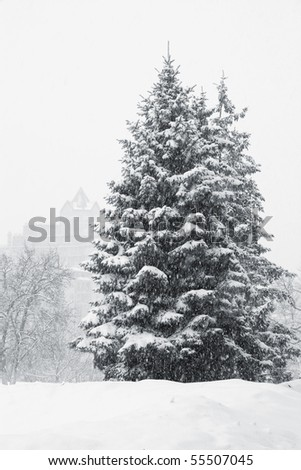 Evergreen tree snow stock photos images amp pictures shutterstock