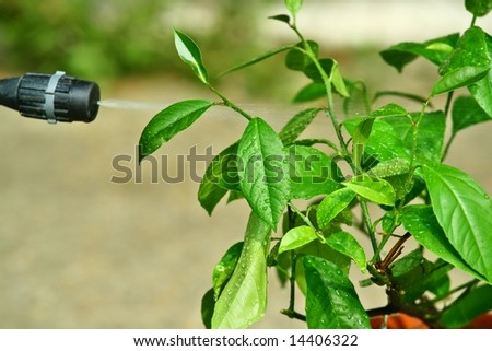 Picture of spray and spraying leafs of small tree - stock photo