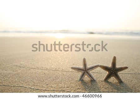 picture of starfish on the beach in the sand - stock photo