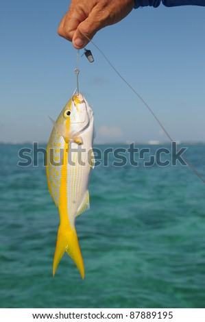 Picture of the hand holding fish - stock photo