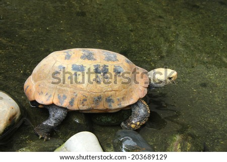 Picture of turtle in Chiang Mai Zoo, Thailand. - stock photo