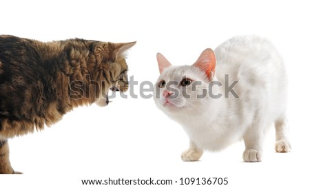 black and white striped kitten names