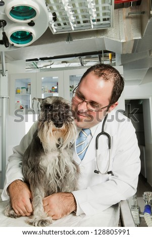 Picture of veterinarian examining puppy - stock photo