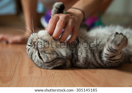 Picture shows a cat which is stroking by someone. What a pleasure. - stock photo