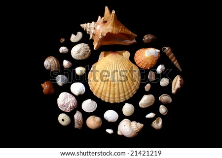 picture with cockleshells on a black background - stock photo