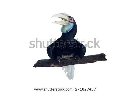 Pictures of birds standing on tree branches. - stock photo