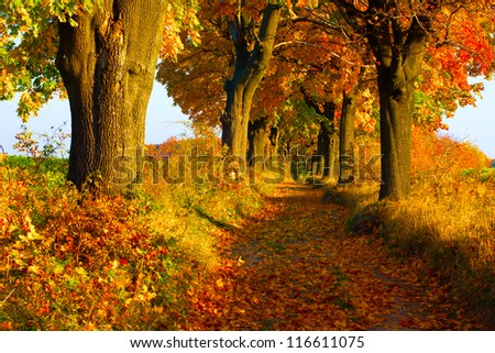 Picturesque autumn alley - stock photo