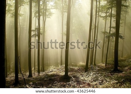 Picturesque autumn forest on the mountain slope with the sunlight passing through the beech trees.