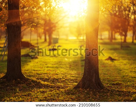 Picturesque autumn park background. Bright yellow and red trees fall background with a bright shining sun.