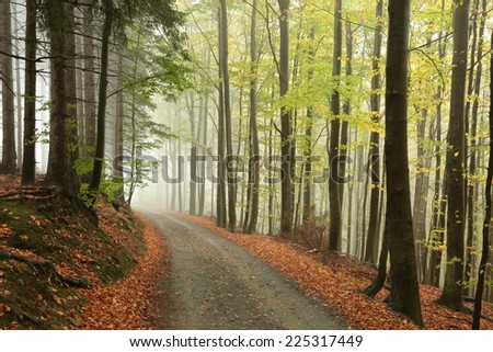 Picturesque autumnal forest in the mist. - stock photo