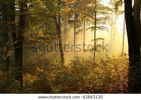 Picturesque autumnal forest on the slope in a nature reserve backlit by the rising sun. - stock photo