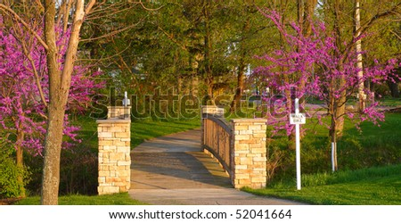 Picturesque footbridge framed by flowering jacaranda trees in the warm light of evening - stock photo