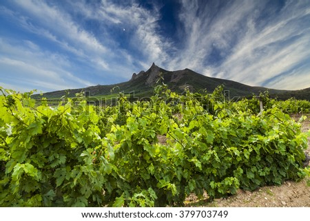 Picturesque landscape with vineyards on the background of the high mountains. - stock photo