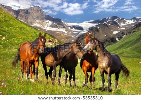 Picturesque mountain landscape with horses - stock photo