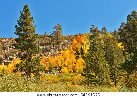 Picturesque multi-colour hillside in autumn park Yellowstone