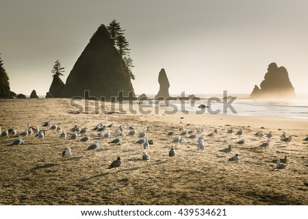 Picturesque of beautiful sunrise landscape of Shi Shi beach in Olympic National Park, Washington State, USA.