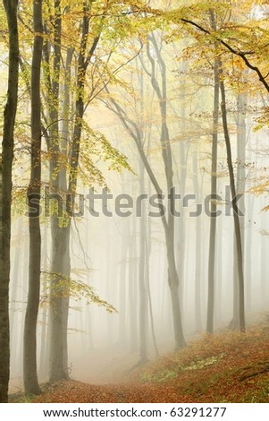 Picturesque path in misty autumn beech forest in a nature reserve. - stock photo