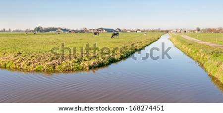Picturesque polder landscape with green meadows, cows and ripples on the water surface of a ditch. - stock photo