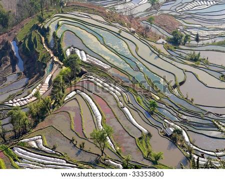 Picturesque rice terrace - stock photo