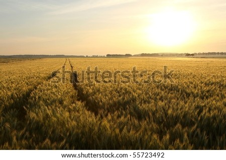 Picturesque rural landscape with dirt road leading toward the horizon. - stock photo