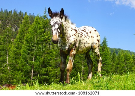 Picturesque rural mountain landscape with spotted foal. - stock photo