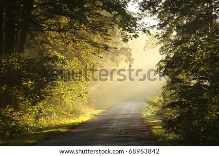 Picturesque scenery of the rural lane in the autumn woods on a foggy morning. - stock photo