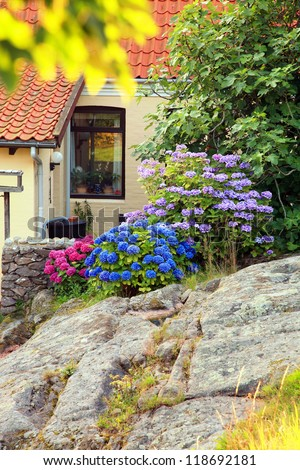Picturesque small garden in backstreet in Denmark with blue and pink hydrangea on rocks. Bornholm, Gudhjem. - stock photo
