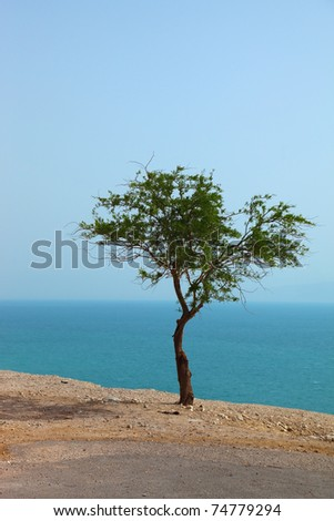 Picturesque tree on dry cliff above the Dead Sea