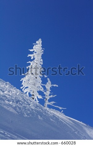 Picturesque  view of snow covered tree on mountain. - stock photo