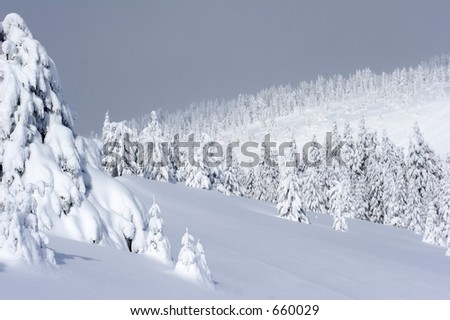 Picturesque view of snow covered trees on mountain. - stock photo