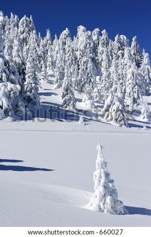 Picturesque view of snow covered trees on mountains - stock photo