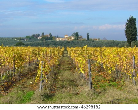 picturesque vineyard in Autumn in Tuscany