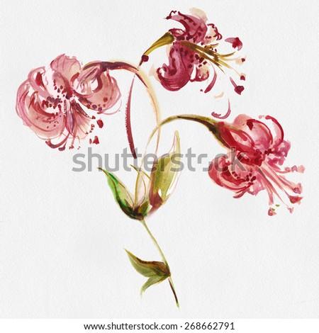 "Picturesque watercolor lilies.Album"" the new flowers drawn with water color paints."" Album""Picturesque Lilies"" - stock photo"