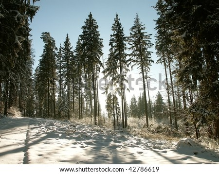 Picturesque winter coniferous forest with the sun shining in the distance. - stock photo