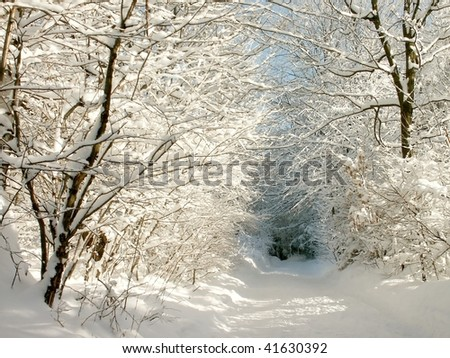 Picturesque winter lane leading through the woods on a sunny and frosty morning. - stock photo