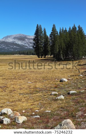 Picturesque Yosemite Park in the early autumn - a large meadow with the dry yellow grass, fur-trees and stones - stock photo