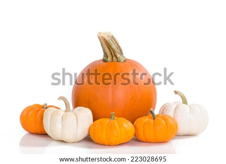 Pie pumpkin surrounded by mini pumpkins against white background - stock photo