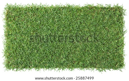 piece of grass isolated on white, background - stock photo