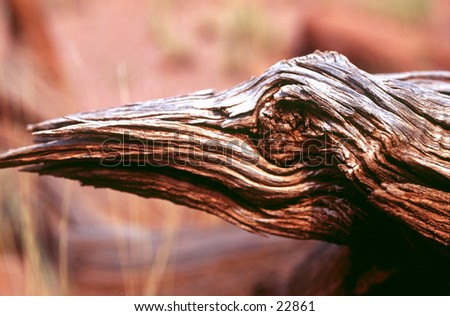 Piece of wood in the desert. - stock photo