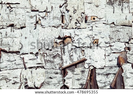 pieces of birch bark. texture of birch bark. Background from birch trees