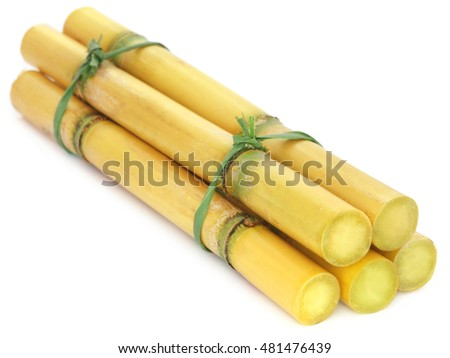 Pieces of sugarcane over white background