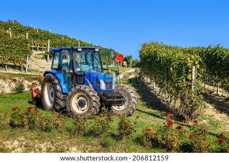 PIEDMONT, ITALY - OCTOBER 17, 2013: Tractor among vineyards during grape harvest season. Worldwide known red wines produced in province of Piedmont Barolo and Barbaresco made from Nebbiolo grape. - stock photo
